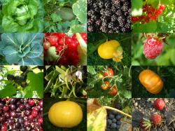 Les combinaisons alimentaires : quels sont leurs intérêts? Pourquoi?