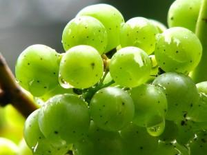 grapes-432267_1280