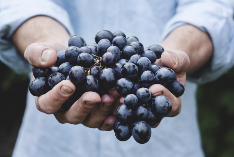La cure de raisin! C'est le moment!
