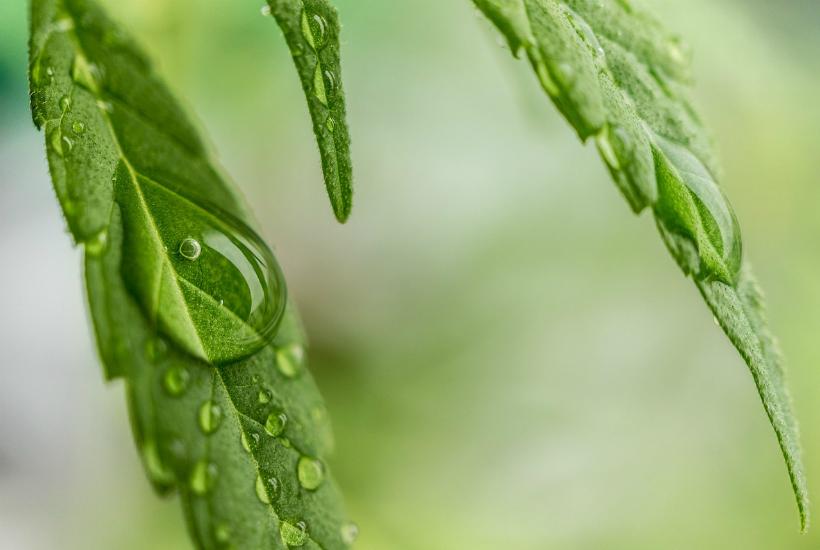 50 excellentes raisons pour arrêter de fumer du cannabis